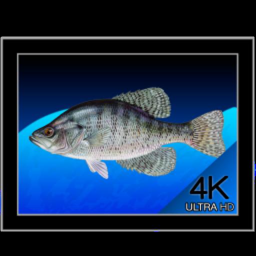 Aquarium 4K for mac(海洋水族馆视频)